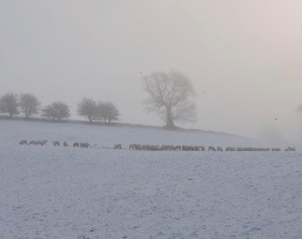 Dales Way (near Staveley): January 2019