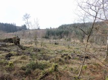 """""""And there are wastes of stump and bramble where once there were singing groves."""" Near Claife Heights, west shore of Windermere: February 2019"""