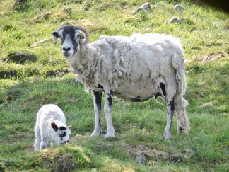 Dales Way (between Windermere and Staveley): Easter Sunday 2019