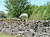 Bigger lamb